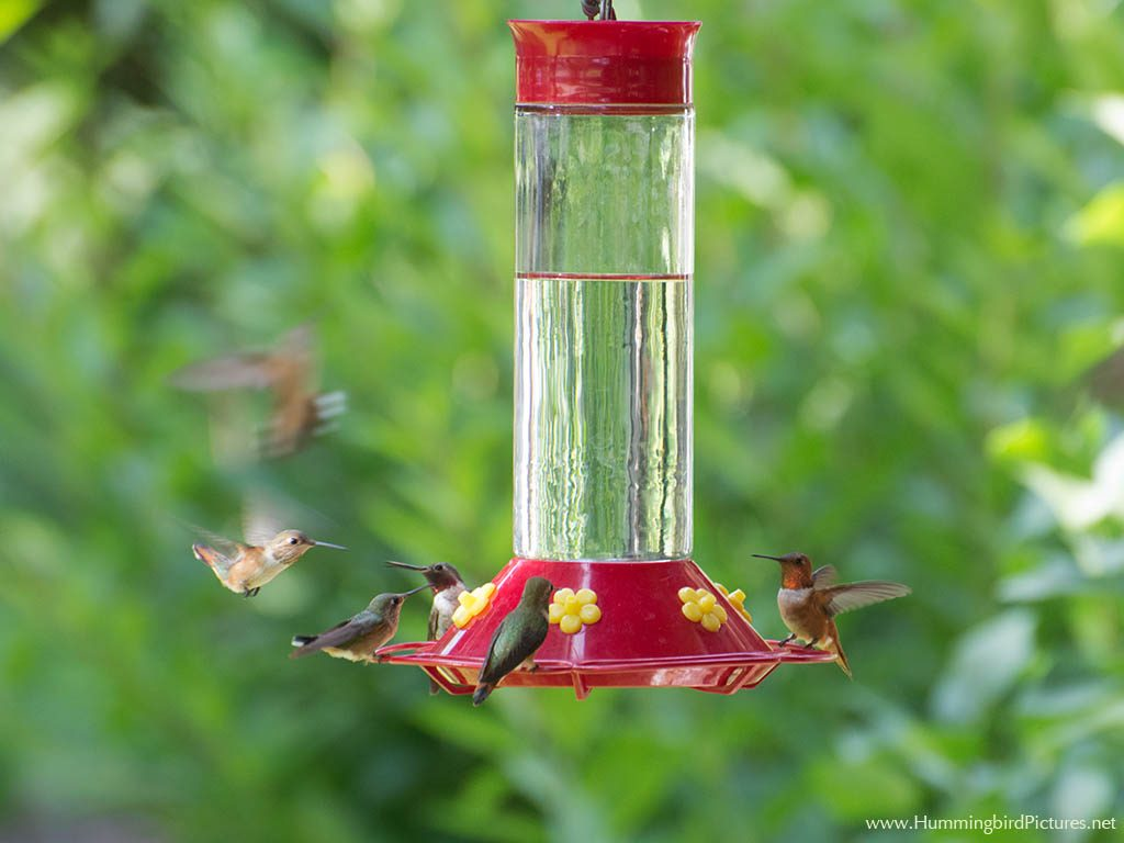 Picture of a very large hummingbird feeder with several hummingbirds