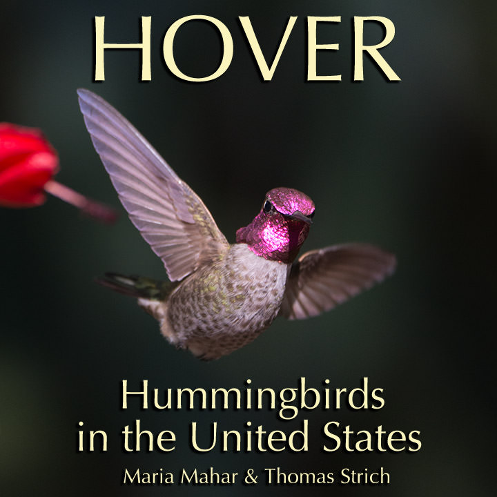Cover image of Hover: Hummingbirds in the United States, a hummingbird ebook