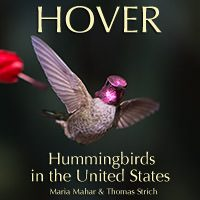 An Interactive Hummingbird eBook