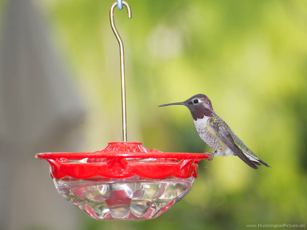 how to keep bees out of hummingbird feeder